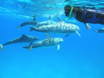 dolphinblessing